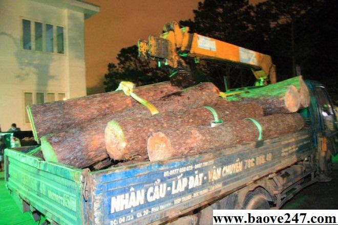 bảo vệ rừng cầm đầu